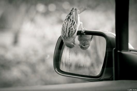 mirate al espejo